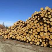 В России зарегистрирован альтернативный бромистому метилу препарат для фумигации древесины